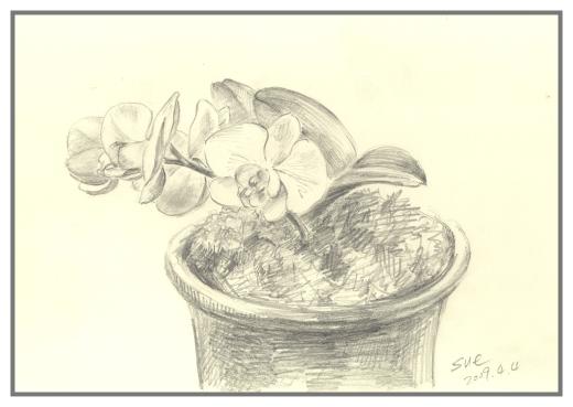 兰花手绘图铅笔