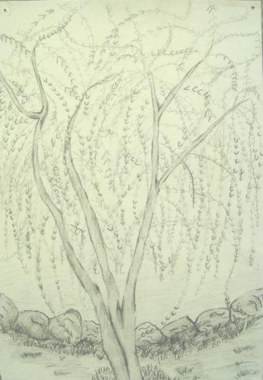 凤凰的画法铅笔画